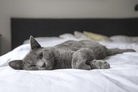 Koľko vydrží byť antialergický matrac antialergický?